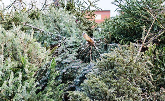 Brandschutztipp: Saisonende für den Weihnachtsbaum